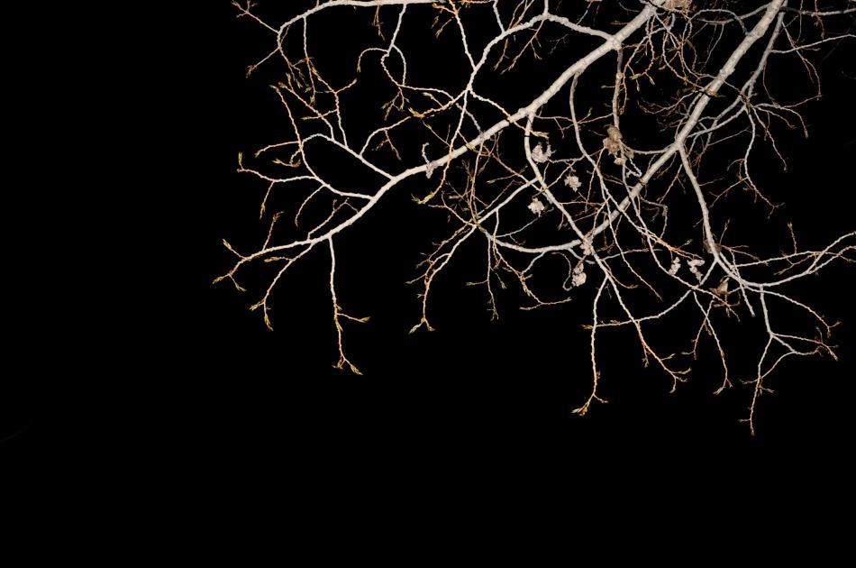 dsc_0903trees